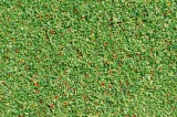 Scatter material meadow light green